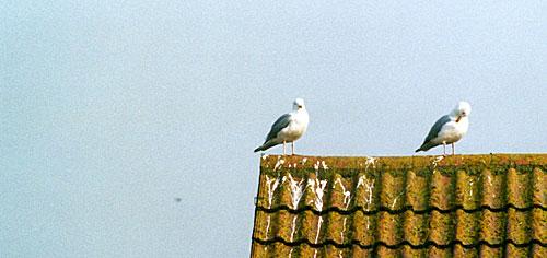 seaford-gulls_ow.jpg
