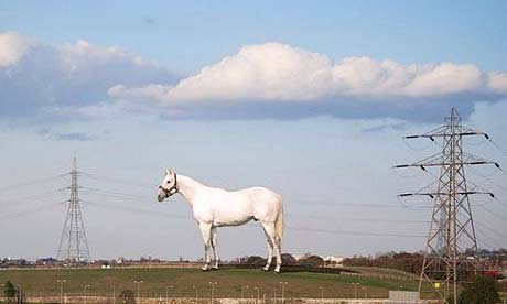 Wallinger's horse. Photo: PAwire