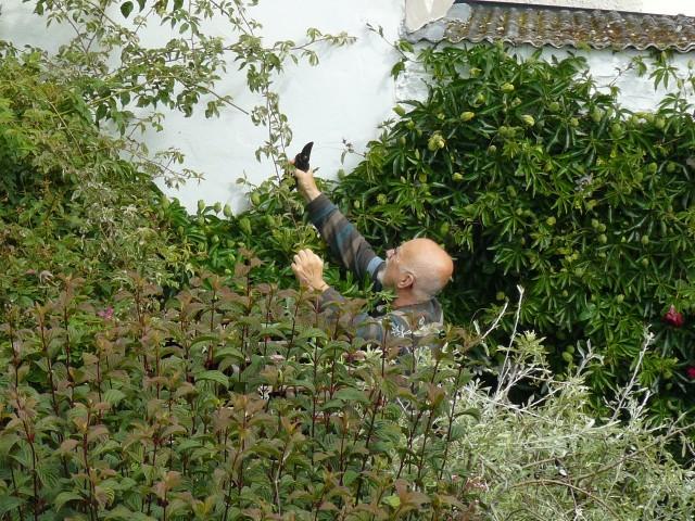 a bit of gardening