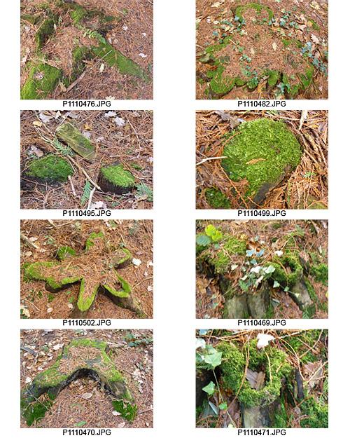 tree stumps in woods by Huxhams Cross
