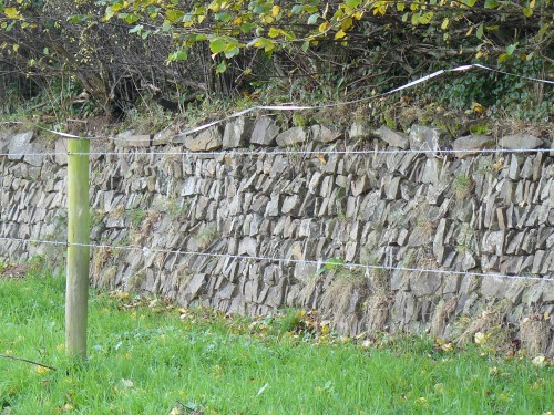 restored hedge on characteristic walled bank