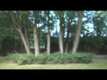 tree circle01.04