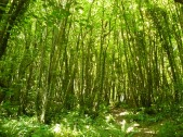 Bickleton Wood-17Jly2013 (16)
