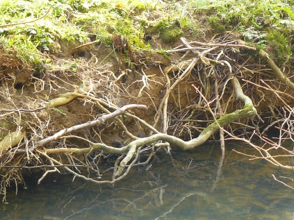 Bickleton Wood-5Mar2013 (12)