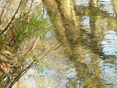 Bickleton Wood-5Mar2013 (13)