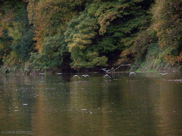 Not the river in the programme, which was the Wye in Herefordshire, but the Torridge, near where I live in Devon.