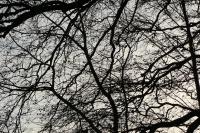 fremquaytrees-150102-017-r72