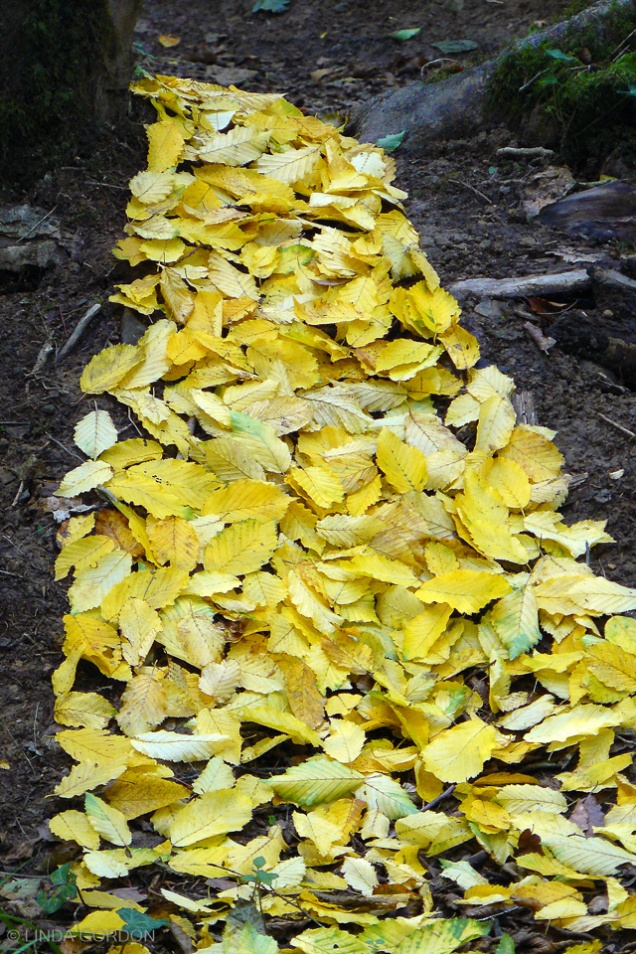 P1200045-goldenleaves(1)copy_ed-r72