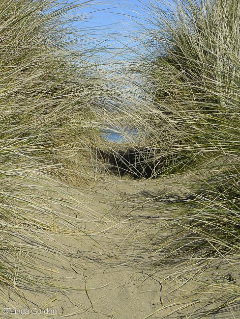 NB-dunes_lindagordon_150321_001-2