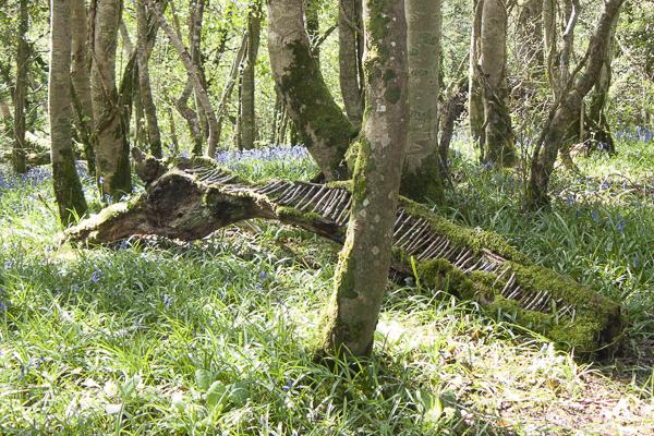 deadwood-bluebells-001