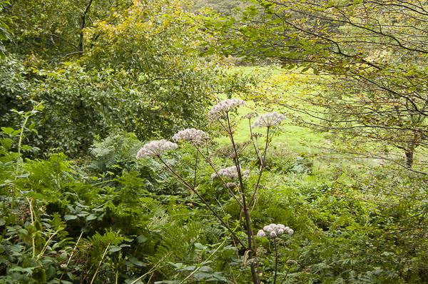 Chapel Wood Essential Nature walk led by Linda Gordon