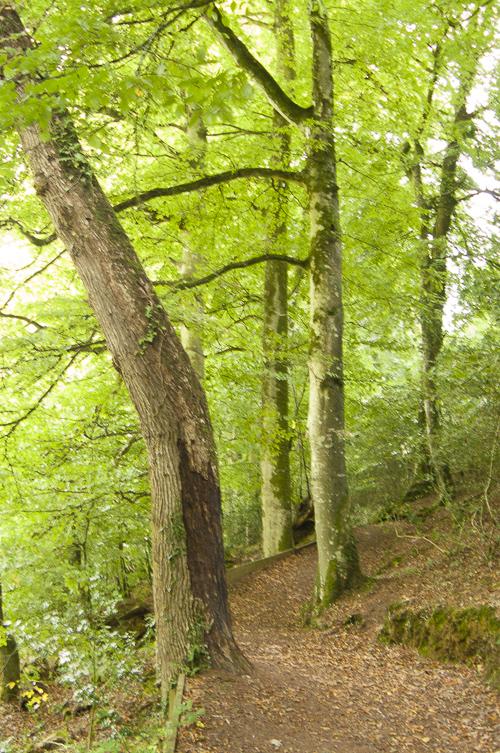 Linda Gordon Essential Nature group walk at Chapel Wood