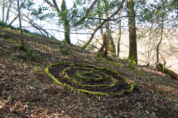 linda gordon - moss-covered branches, Bucks Valley Woods, North Devon, Feb 2016