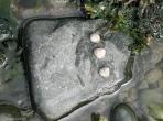 BucksBeach_lindagordon_160727_0012_LR