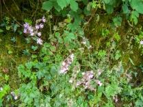 Bucks Mills flowers