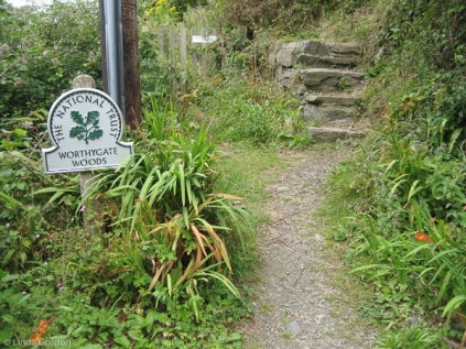 Climbed up into Worthygate Woods along the cliff top, and took the Coast Path heading east.