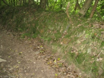 A very old traditional Devon hedge, on an earth bank.