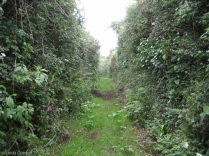 An ancient Green Lane. Lots of wild plants and butterflies in this sheltered lane.