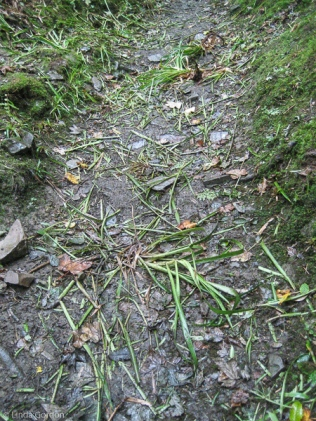 I had not gone very far before it started to rain heavily. I came across where someone had been strimming the verges.