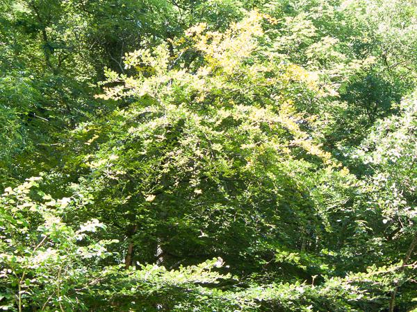 foliage_lindagordon_160826_0001_lr