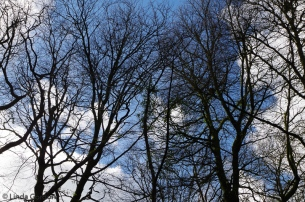 root-branch-WP_lindagordon_170216_011-2