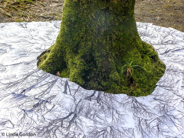 root-branch-WP_lindagordon_170310_2-3