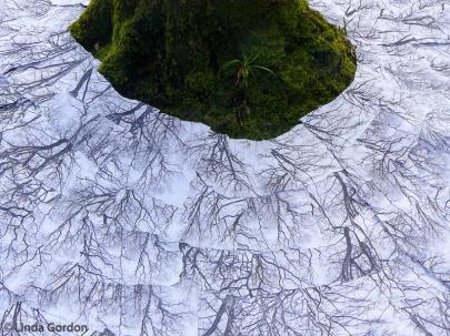 root-branch-WP_lindagordon_170310_2
