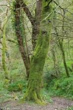 fav-tree_lindagordon_170413_086_LR
