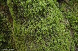 fav-tree_lindagordon_170413_090_LR