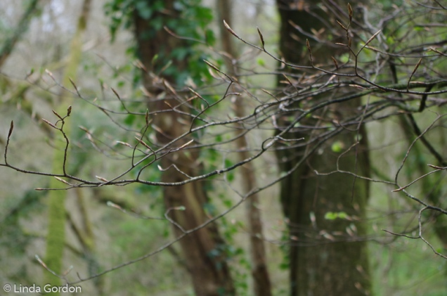 fav-tree_lindagordon_170413_092_LR