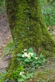 fav-tree_lindagordon_170413_111_LR