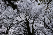 fav-tree_lindagordon_170413_113_LR