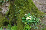fav-tree_lindagordon_170413_123_LR