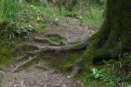 fav-tree_lindagordon_170413_132_LR